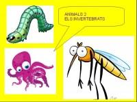 Els invertebrats
