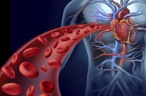 11-cosas-sorprendentes-sobre-el-sistema-circulatorio-que-no-sabias-1